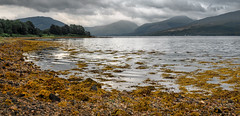 A Fyne View (http://www.richardfoxphotography.com) Tags: lochfyne loch scottishhighlands scotland sea atlantic kelp thunderstorm panoramic mountains