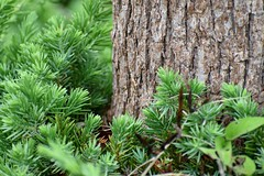 The big and the small (Abhay Parvate) Tags: tree trunk shrub green nature macro bokeh