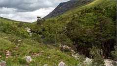 Oly_6180130 (calpha19) Tags: imagesvoyagesphotography adobephotoshoplightroom olympusomdem1mkii em1mkll zuiko ed1260swd voyage roadtripinscotland ecosse scotland juin 2019 landscapes paysages glenetive glencoe vallée river etive torrent montagne nature nationalgéographic ngc flickrsexplore explorez waterfall cascades bridge finnishglen carnockburn devilspulpit