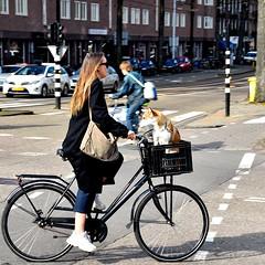 De hond uitlaten - Hobbemakade Amsterdam (FaceMePLS) Tags: amsterdam nederland thenetherlands facemepls nikond5500 straatfotografie streetphotography tweewieler fiets bike bicycle fietser fietsmand schoudertas meisje vrouw girl woman sneakers
