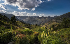 Pyrenees, Andorra (StarCitizen) Tags: mountains clouds sky pyrenees andorra landscape summer foliage sunny flowers
