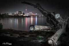 Toronto skyline under a tree (catchaview_photography) Tags: toronto ontario canada city night citylights tree stump longexposure sony northamerica lakeontario reflection croatian a7rii etobicoke humberbay lakeshore