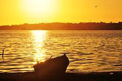 Pássaro (Ruby Ferreira ®) Tags: araruamarj silhuetas silhouettes ripples sunset pôrdosol boat barco lagoa lagoon bird pássaro vegetação