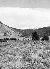 Yellowstone National Park (LarsHolte) Tags: pentax 645 pentax645 645n 6x45 smcpentaxfa 75mm f28 120 film 120film analog analogue kosmo foto mono 100iso caffenolc mediumformat blackandwhite classicblackwhite bw monochrome filmforever filmphotography ishootfilm larsholte homeprocessing usa yellowstone nationalpark landscape wyoming explored