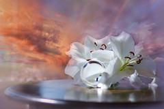 Wild sky! (Elisafox22) Tags: elisafox22 sony ilca77m2 100mmf28 macro macrolens telemacro lens texturaltuesday htt lilies white petals crystalsphere glass ball sky stormy wild texture pattern table reflections wood textures smooth indoors outdoors elisaliddell©2019