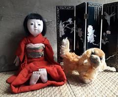 Emiko and Peky (shero6820) Tags: old vintage antique doll toy ichimatsu japan gofun ningyo steiff dog pekinese