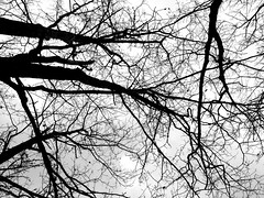 connections (77ahavah77) Tags: limbs trees tree connection union nature systems companionship fellowship