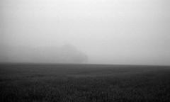 Isolation (Rosenthal Photography) Tags: asa400 kleinbildformat ilfordlc2912920°c9min ff135 analog ilfordhp5 epsonv800 olympustrip35 schwarzweiss frühling ilfordrapidfixer 35mm sommer 20190601 isolation mist morning mirror mistymirror landscape fog summer june field trees blackandwhite olympus olympus35 trip trip35 dzuiko zuiko 40mm f28 ilford lc29 129 14 rapid fixer hp5 hp5plus epson v800