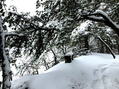 waiting (77ahavah77) Tags: snow winter maine seat white landscape outside nature