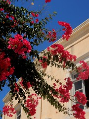 """The true secret of happiness lies in taking a genuine interest in all of the details of daily life...."" (fl_mala) Tags: parosisland greece oldtree cyclades ilovegreece lifeisbetterontheisland beautifulcolours colours collectmoments wonderfulworld greatmoment discovergreece greekislands paros bluesky"