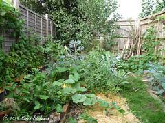 August 5th, 2019 Part of the veg garden (karenblakeman) Tags: cavershamgarden caversham uk vegetables 2019 2019pad august reading berkshire
