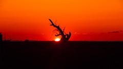 Tree's Heart (anlgngr7) Tags: canon eos 77d is usm 18135mm nano lens sunset sun sky red güneş günbatımı kızıl gökyüzü kırmızı tree trees siluet gölge shadow silhouette ağaç ağaçlar