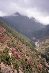 NEPAL Rhododendron (mikelsson89) Tags: nepal himalaya everest region contax t2 portra 160 kodak