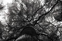Longueurs (Atreides59) Tags: lyon rhone rhône france nature arbre tree ciel sky black white bw blackandwhite noir blanc nb noiretblanc pentax k30 k 30 pentaxart atreides atreides59 cedriclafrance