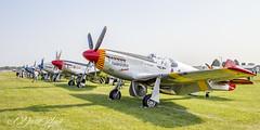 Mustangs (david.horst.7) Tags: airplane plane fighter wwii aircraft northamerican p51 p51c jp51d mustang warplane warbird us usa usaf