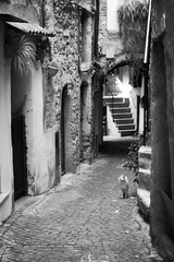 While in Italy.. (Je Dy - The Jedi Photographer) Tags: cat street italy black white bnw chat rue typique village italia italie