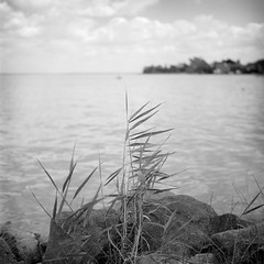 Lake Balaton (Bernád Rozália) Tags: analoque film bw blackandwhite selfdeveloped mediumformat fujifilmneopanacros100 yashicamat124g epsonv700 lake balaton summer hungary