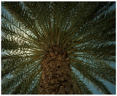 Shoshone 12 (misu_1975) Tags: shoshone ca desert deathvalley pentax 67 6x7 pentax67ii smc105mmf24 mediumformat 120 kodak portra