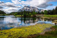 Mount Rundle and algae on Cascade Ponds (Madonna Martin Photography) Tags: cascadeponds mountrundle banffnationalpark alberta canada landscape mountain water bridge