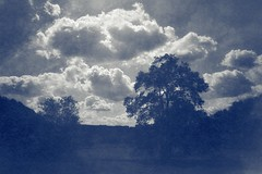 Evening (Wilkins Flasher) Tags: evening clouds trees cyan emotional feeling atmosphere pictorialist