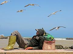Tired Fisherman - Essaouira, Morocco (TravelsWithDan) Tags: man fisherman asleep exhausted seagulls ocean city urban essaouira morocco africa candid canong3x ngc
