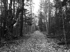 through the wood (77ahavah77) Tags: landscape wood forest path way pathway brianwilcox maine blackwhite