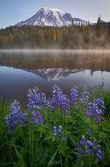 Misty Blues (Hilton Chen) Tags: mountrainiernationalpark washingtonstate landscape lupines misty reflectionlake summer sunrise wildflowers