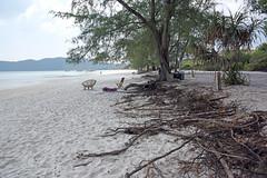 Wild beach (bluefam) Tags: beach wild tree sea sand sanloem korong cambodia