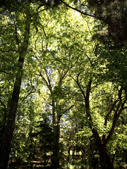 breathings of Light (77ahavah77) Tags: trees forest florida green landscape nature