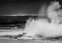 Eruption (yorgasor) Tags: tiltshift araxfoto hasselblad 80mm geyser yellowstone sony a7r2 a7rii