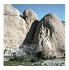 Bright granite (ADMurr) Tags: daa662edit california desert joshua tree np granite rolleiflex 28f kodak portra zeiss planar