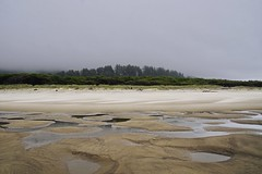Tidelands Series (Mary Ann Whitney-Hall) Tags: oregon coast ocean pacific fog tidelands sand water reflections pools