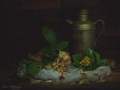 Wednesday Still Life (Dave Whiteman - AU) Tags: stilllife lensbabyvelvet56 lightpainting flowers flower lightbox studio floral things