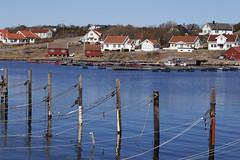 Vikerkilen 1.11, Hvaler, Norway (Knut-Arve Simonsen) Tags: asmaløy hvaler norge норвегия norway noriega norwegen norvegia norvège नॉर्वे 挪威 ノルウェー நோர்வே νορβηγία sydnorge sørnorge østlandet glomma oslofjorden østfold norden scandinavia скандинавия э́стфолл фре́дрикстад гло́мма ослофьорд vann hav benk gress tre hytte brygge water sea bench grass tree cottage pier banco de mar agua hierba árbol cabaña muelle wasser meer bank gras baum hütte acqua panca albero molo вода морской скамейка трава дерево коттедж пирс erba mare vikerkilen