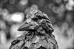 Corvo (@WineAlchemy1) Tags: crow corvo simongriffiths potfest huttonintheforest cumbria lakedistrict bokeh blackandwhite nerosubianco noiretblanc blancoynegro monochrome art ceramics pottery