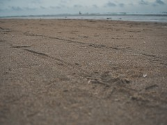JS069684 (crosathorian) Tags: nordsee urlaub strand wasser meer dänemark römö röm