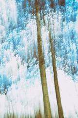 arbres (Chocolatine photos) Tags: filé arbres bleu blanc marais vermelles photo photographesamateursdumonde pdc vitesse makemesmile nikon naturebynikon flickr