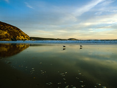 Two Birds (Explored) (OzGFK) Tags: 120 645 australia cinestill50d darbybeach pentax645n water wilsonsprom wilsonspromontory analog beach mediumformat ocean sunset reflection seagulls seagull bird evening dusk lateafternoon nationalpark cinestill cinestillfilm