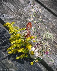 Autumn Wildflowers (KRHphotos) Tags: westvirginia stilllife spruceknob wildflowers nature whitmer unitedstatesofamerica