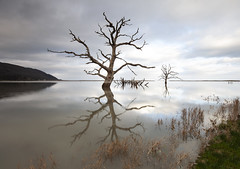 Still Standing (Coless66) Tags: beautiful tranquility trees porlock exmoor canon7d manfrotto tidal time love skies moments thought memories submerged past mindfulness scenic tide sunrise stillness peaceful branches longexposure lephotography leefilters marshes