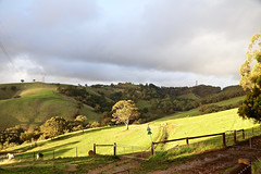 Afternoon Sun on Greenhill_3688 (Rikx) Tags: greenhill sunlight afternoon green outdoor clouds storm hills light farm farmanimals fences gates trees grass pasture bushland southaustralia winter canon80d australianphotographers explore explore3