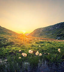 sunset on the mountain (bjorns_photography) Tags: sunset cotton grass mountain yellow orange clouds green summer
