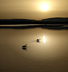 (superbearded_) Tags: nature flamingos stagno molentargius alba sunrise