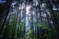 Gloria - Sony RX0 II (Andreas Voegele) Tags: sony sonyrx0ii sonyrx0 rx0ii andreasvoegelephoto landscape gloria forest