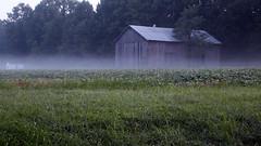 a little fog (scott1346) Tags: morning foggy grass field barn cool air 1001nightsthenew canont3i misty inviting 1001nightsmagiccity greatphotographers autofocus thegalaxy tamronaf18270mmf3563diiivcldasphericalif