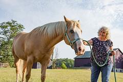 ohio-butler-county-oxford-sycamore-farms-country-inn-cheryl-lwb-7024 (FarFlungTravels) Tags: animals bedbreakfast bb bandb bedandbreakfast butlercounty countryinn farm horse oxford sycamorefarms