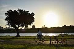 公園 (dogcat131) Tags: 公園 新北 台北 河濱 台灣 夕陽 黃昏 太陽 樹 剪影 腳踏車