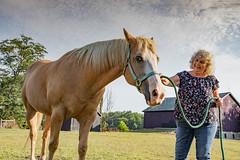ohio-butler-county-oxford-sycamore-farms-country-inn-cheryl-lwb-7025 (FarFlungTravels) Tags: animals bedbreakfast bb bandb bedandbreakfast butlercounty countryinn farm horse oxford sycamorefarms