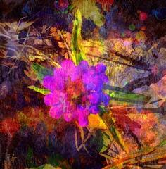 Lake Huron rock flower (Explored) (writing - invisible at times) Tags: desiderata peace resilience brokendreams beatpeacewithgod lakehuron ontario canada wildflower maxehrmann