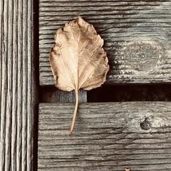 « Il n'y a plus de solitude là où il y a de la poésie. » (Muse poétique) Tags: poésie poetry poetic nature solitude square carré formatcarré